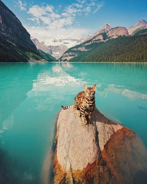 Yerinde Olup Dünyayı Gezmek İsteyeceğiniz Kedi Suki'nin Kıskandıran Fotoğrafları - 1