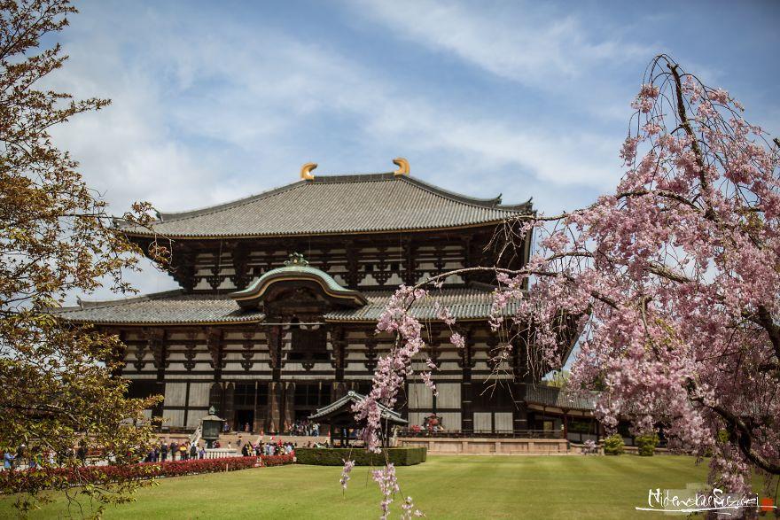 Japonya'da Bahar Müjdecisi Kutsal Ağaç: Sakura - 1
