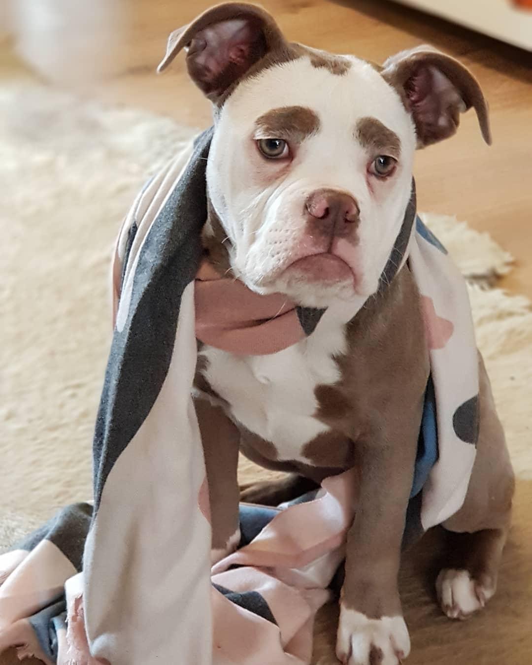 Sosyal Medyanın Üzgün Suratlı Köpeği: Madame Eyebrows - 1