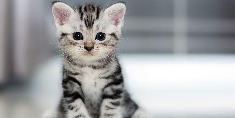 Kedilerin Kendilerine Görev Edindikleri Meslekler - 1