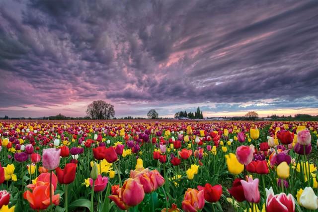 Baharın Selam Vermesi İle İçlerimizi Pamuk Şekerine Çeviren Minnoş Detaylar - 1