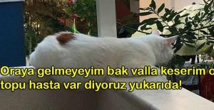 Tipleriyle Bizlere Benzeyen Ponçik Kedilere Yazılmış Diyaloglarla Hepimizi Güldürecek 17 Paylaşım