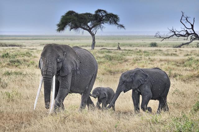 Hayvan Dostlarımızla İlgili Bir Aydınlanma Yaşamanıza Sebep Olacak İlginç Bilgiler - 1