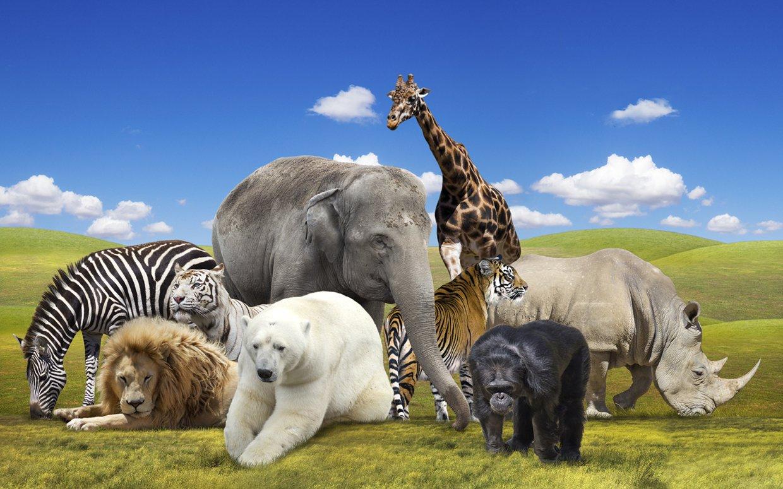 İnsanların Hayallerini Süsleyen Özelliklere Sahip 15 Hayvan - 1