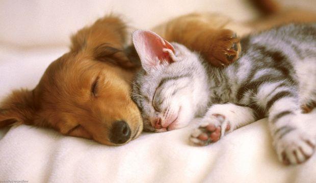 Birlikte Seyahat Etmekten Hoşlanan Köpek Ve Kedinin Dostluğundan Gününüze Neşe Katacak Görseller - 1