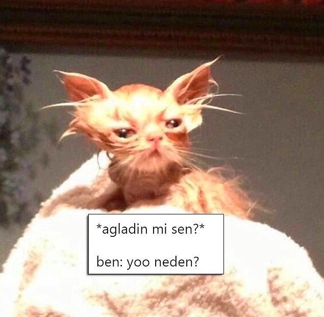 Tipleriyle Bizlere Benzeyen Ponçik Kedilere Yazılmış Diyaloglarla Hepimizi Güldürecek 17 Paylaşım - 1