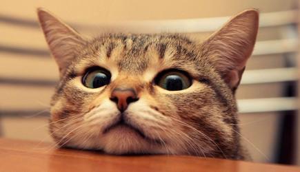 Kedilerin Gözlerine Bakarak Saatinizi Ayarlayabilirsiniz