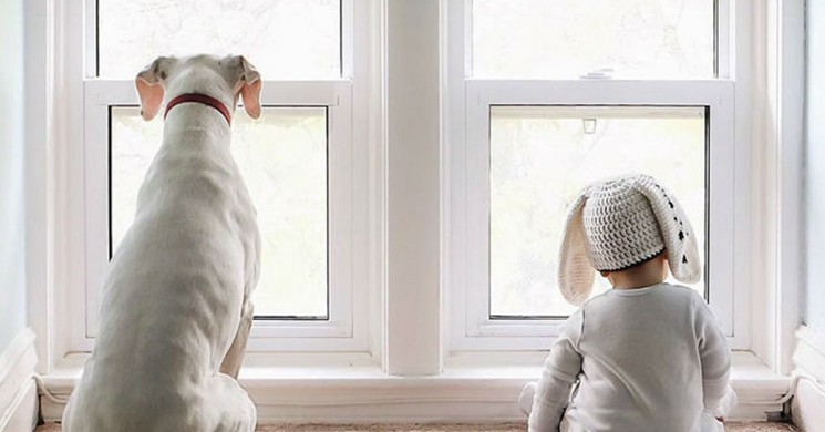 İşkenceye Maruz Kalmış Köpeğin Artık Tek Bir Dostu Var