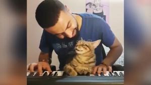 Sahibinin Çaldığı Orga Eşlik Eden Sevimli Kedi