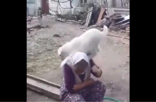 Nenenin Tepesine Çıkan Sevimli Keçiler
