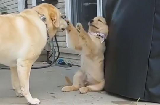 Annesiyle Kavga Eden Yaramaz Köpek