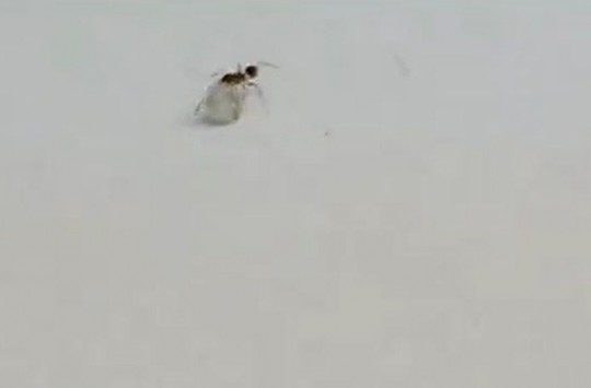 Atölyeden Minik Bir Elmas Tanesi Yürütürken Yakalanan Karınca