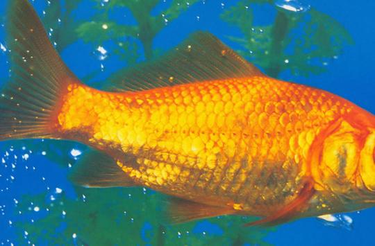 İlgi Hastası Balık