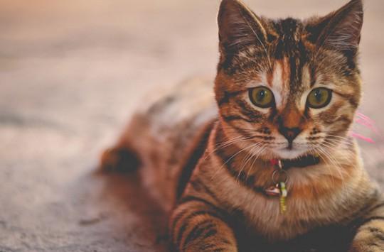 Hasta Olan Kedisine Elleriyle Çorba İçiren Koca Yürekli Abimiz