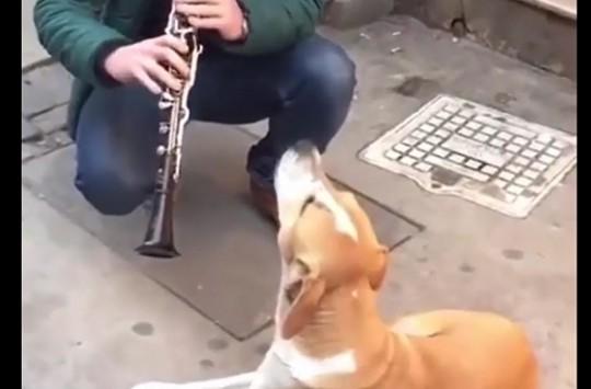 Şarkıya Eşlik Eden İsyankar Köpek Görenleri Gülümsetti