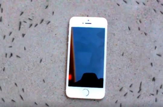 Telefonun Radyasyonundan Etkilenen Karıncaların Muazzam Gösterisi