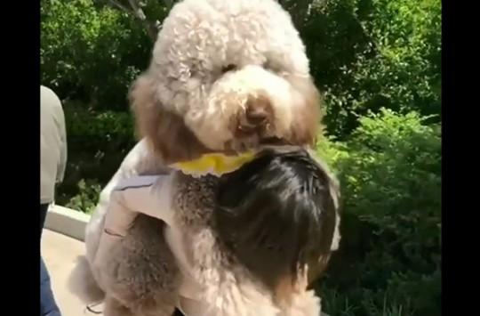 Kendilerinden Büyük Köpek Dostlarını Sırtlarında Taşıyan Koca Yürekli İnsanlar