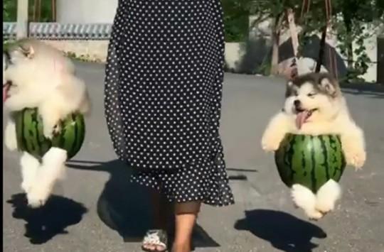 Yaşama Sevinciyle Dolup Taşan Sevimli Köpekler