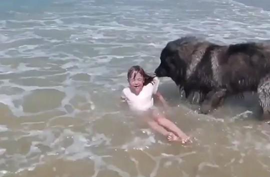 Küçük Çocuğun Tehlikede Olduğunu Düşünen Köpekten Müthiş Hareket