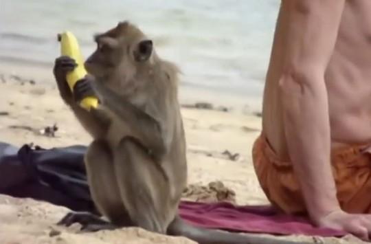 Maymunların Yaptığı Hırsızlıkları Görünce Gülmekten Öleceksiniz