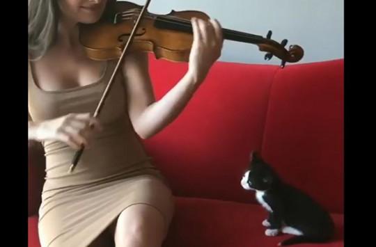 Sahibinin Keman Performansını Hayranlıkla İzleyen Sevimli Kedi