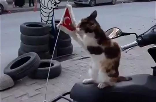 Sevimli Kedinin Bayrak Sevgisi Sosyal Medyada Çok Konuşuldu