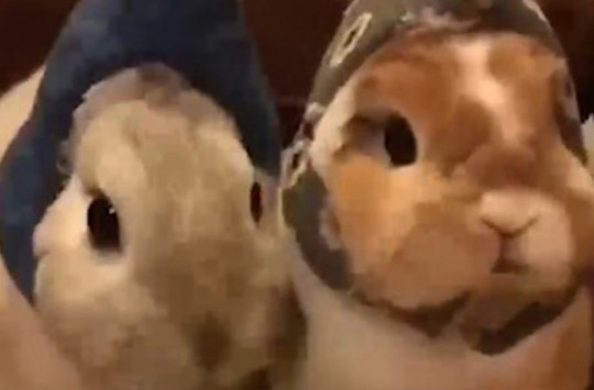 Yemek Yiyen Sevimli Tavşanlar Sosyal Medyayı Salladı