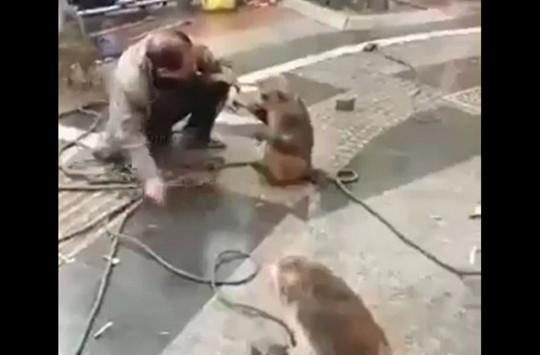 Yaptığı Gösteride Maymunlardan Hayatının Dayağını Yiyen Adam