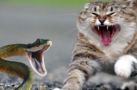 Kediye Kafa Tutan Yılan ve Hiç Oralı Olmayan Kedi